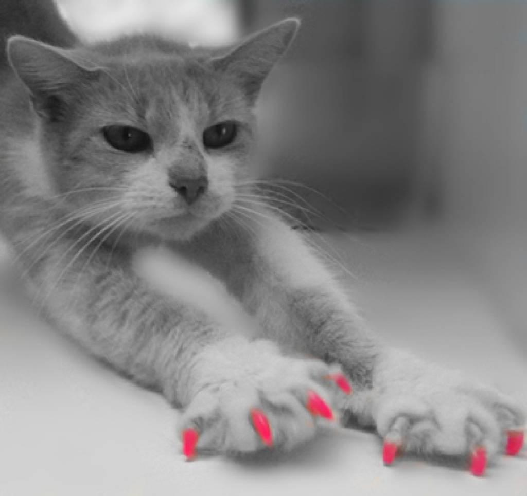 soft-claws-nagel-hoesjes-klauwbeschermers-set