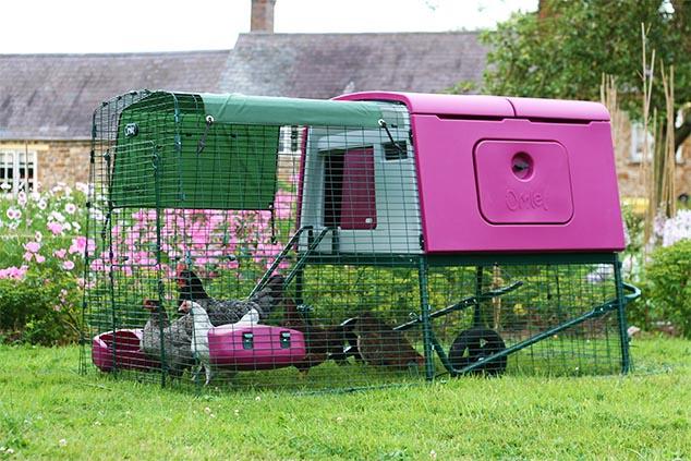An-Eglu-Cube-chicken-coop-and-chickens-brightens-any-garden