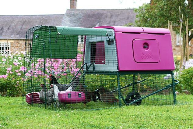 An-Eglu-Cube-chicken-coop-and-chickens-brightens-any-garden